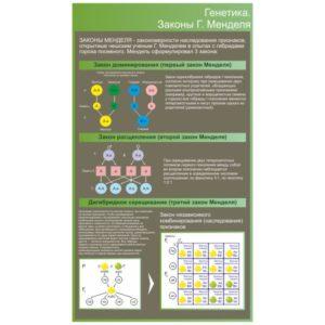 Стенд Генетика. Законы Менделя