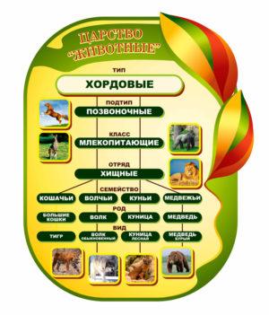 Царство животные хордовые макет