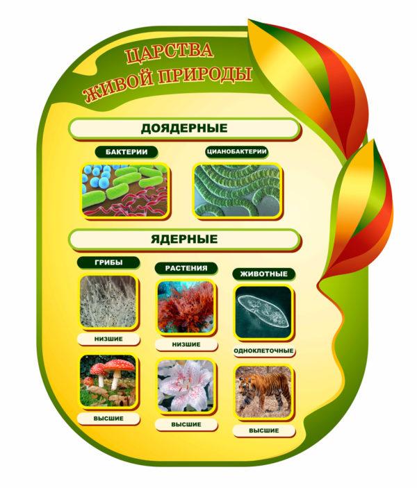 Царства живой природы макет