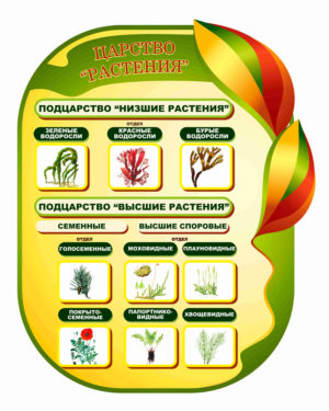 Царство Растения макет