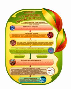 Уровни организации живой природы макет